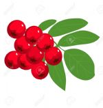 Rowanberry (Fructus Benedictus, Hearts Delight)